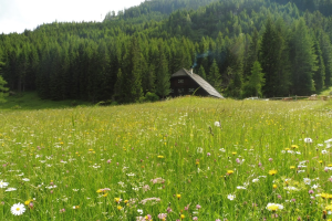 Blumenwiese mit Almhütte